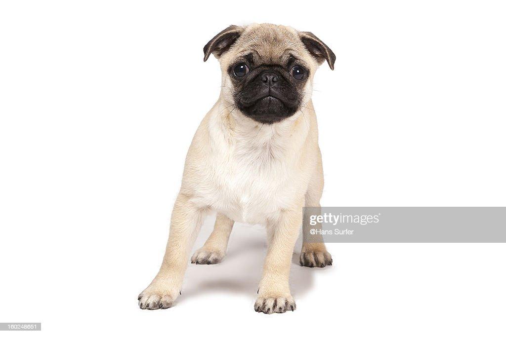 Pup-dog puppy! : Stock Photo