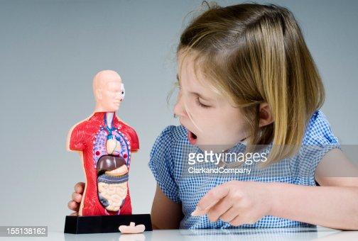 Pupil Looking At Human Anatomy Model