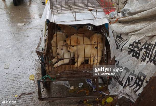Puppies are seen in a cage at a dog meat market in Yulin in China's southern Guangxi region on June 21 2017 China's most notorious dog meat festival...