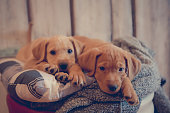 Two adorable mixed breed young dogs