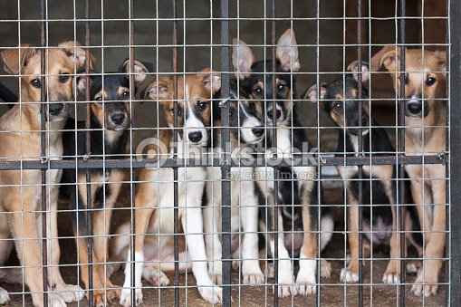 Puppies locked in the cage : Stock Photo