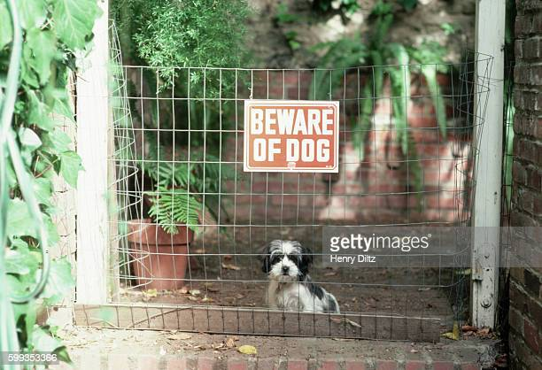 Puppy and 'Beware of Dog' Sign