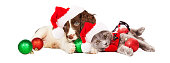 Cute little puppy and kitten wearing Christmas outfits and Santa Claus hats laying together