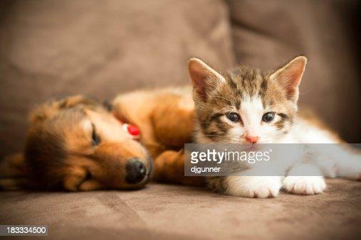 Cachorrinho e Filhote de Gato