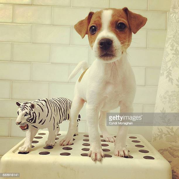 Puppy and Toy Tiger