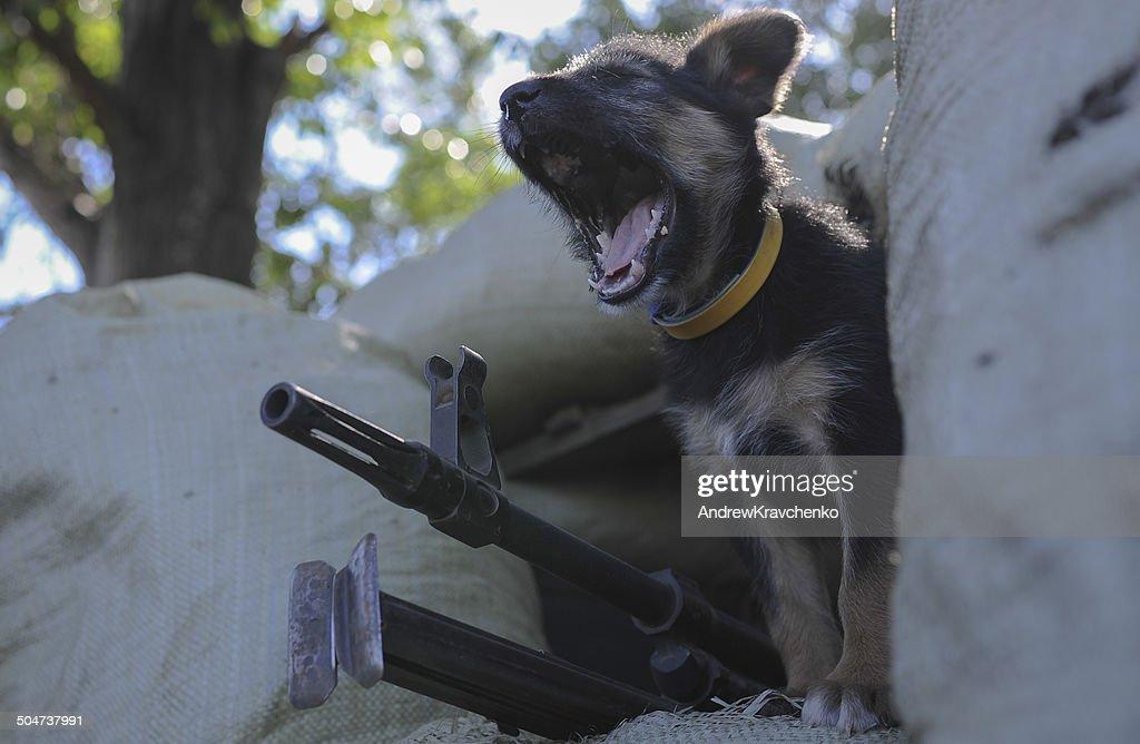 Puppy and war