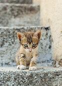 Puppy cat
