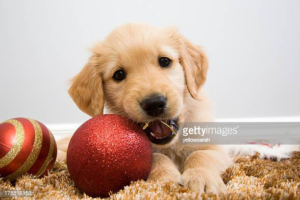 Puppy Christmas Chew