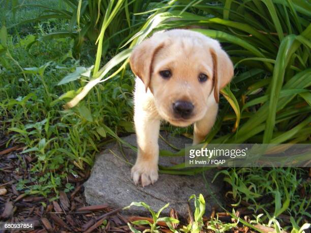 Puppy covered by the grass