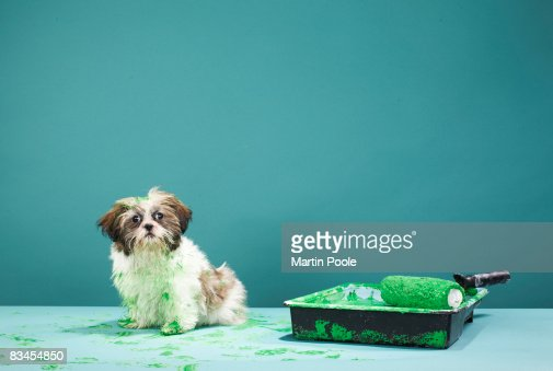 Puppy covered in green paint from paint tray : Stock Photo