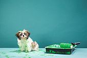 Puppy covered in green paint from paint tray