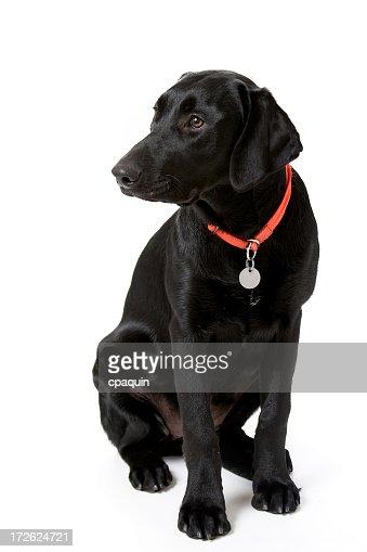 子犬犬のトレーニング