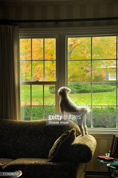 Puppy dog looking outside