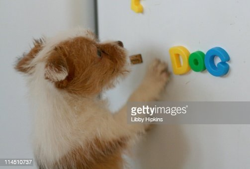 Puppy dog magnets : Stock Photo