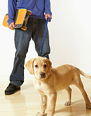 Puppy dog on leash