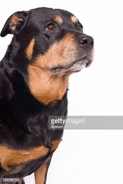 Olhos de cachorrinho