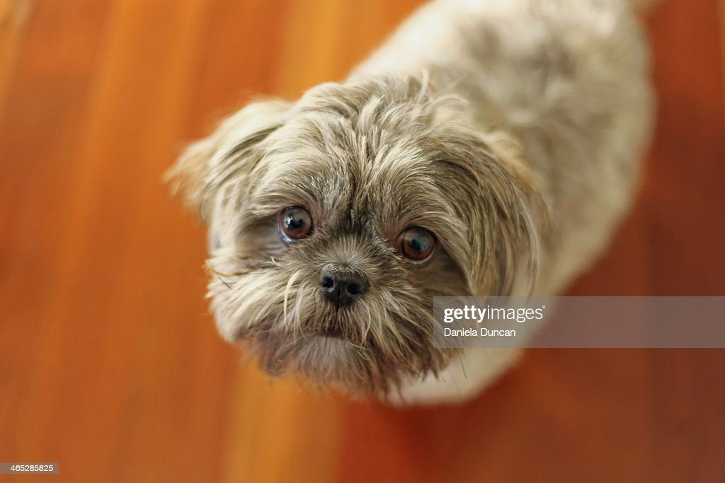 Puppy eyes : Stock Photo