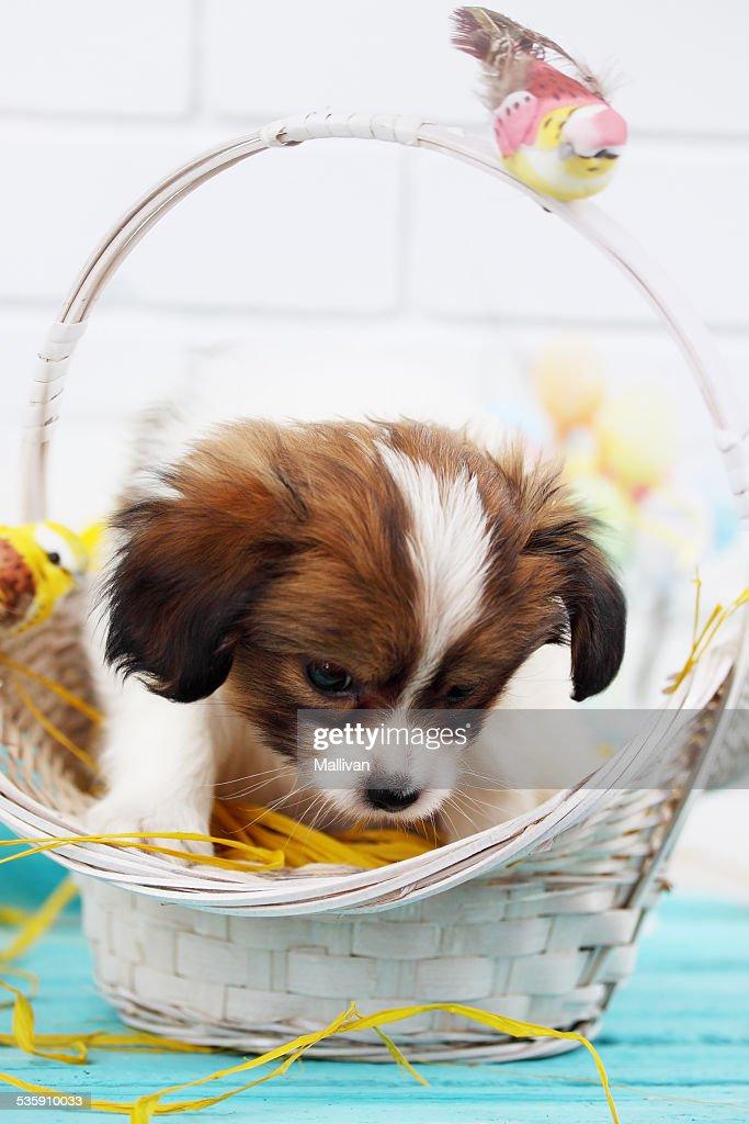 Cachorro en una cesta : Foto de stock