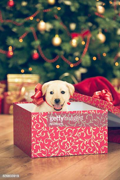 Puppy in a Christmas present