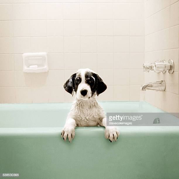 Puppy in Bathtub