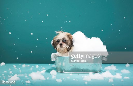 Puppy in foam bath : Stock Photo