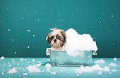 Puppy in foam bath