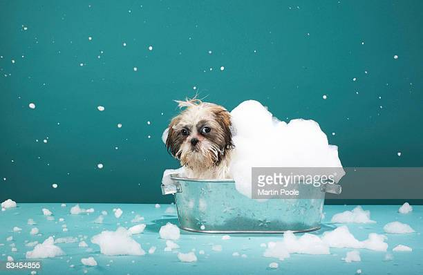 Puppy in foam bath