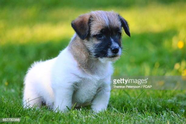 Puppy on standing on grass