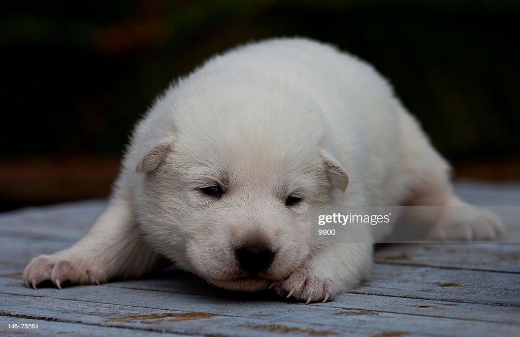 Puppy : Stock Photo