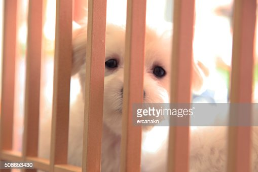 Puppy : Stock Photo