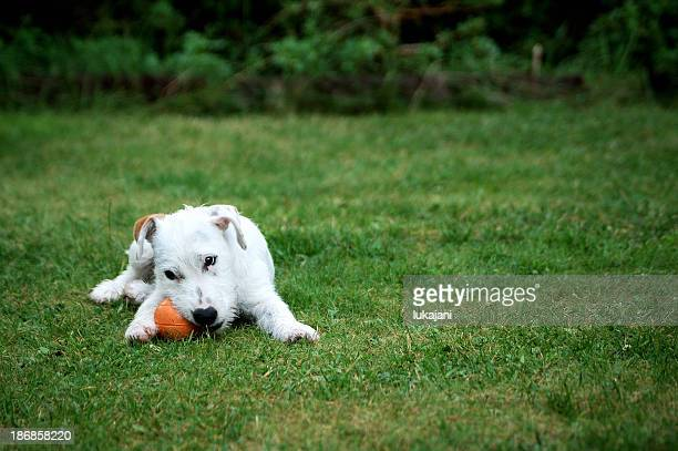 Puppy playing ball