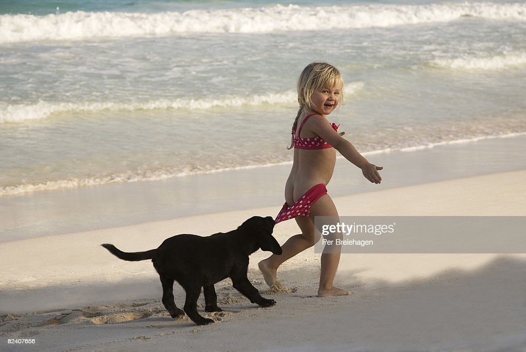 Puppy pulling down girl's swimsuit bottoms : Stock Photo