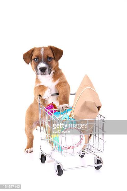 Cucciolo di Shopping
