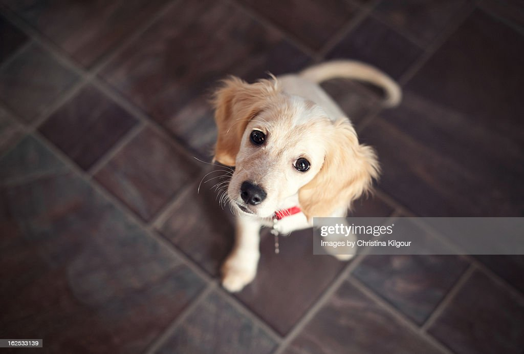 Puppy Sitting And Looking Up : Stock Photo