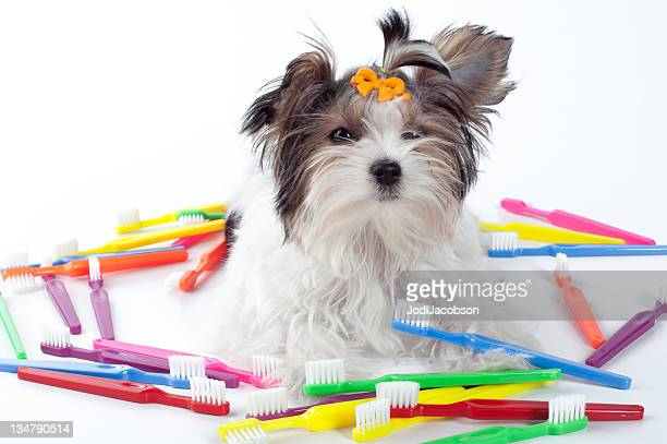 puppy sitting with colorful toothbrushes