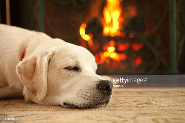 Puppy sleeping by the fireplace