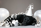 Puppy sleeping in party decorations