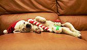 Puppy sleeps on sofa with christmas toys