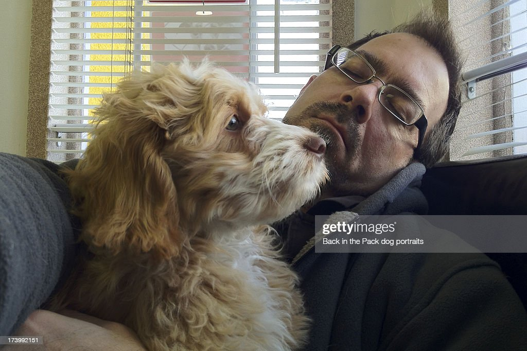 Puppy staring out window while man sleeps : Stock Photo
