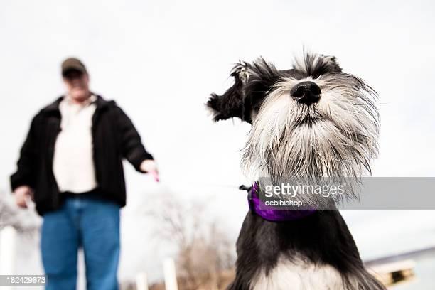 Puppy Walking His Man
