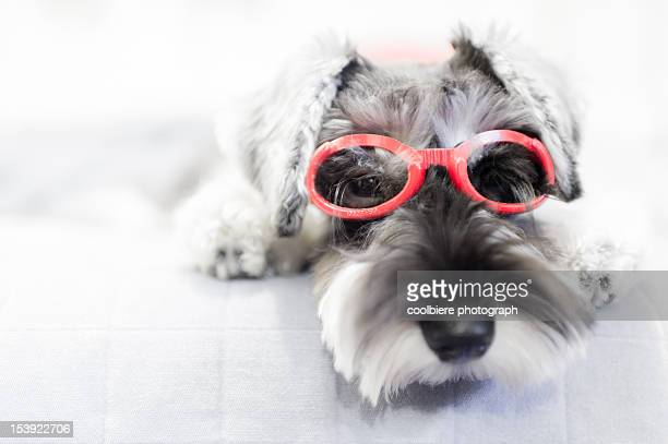 Puppy wearing red glasses