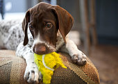 Puppy with chewed up ball