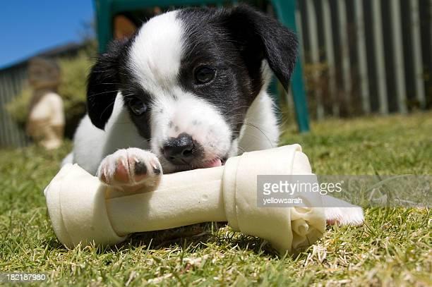 Puppy With Bone