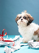 Puppy with ripped wrapping paper
