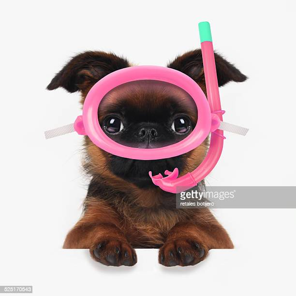 Puppy with snorkeling equipment