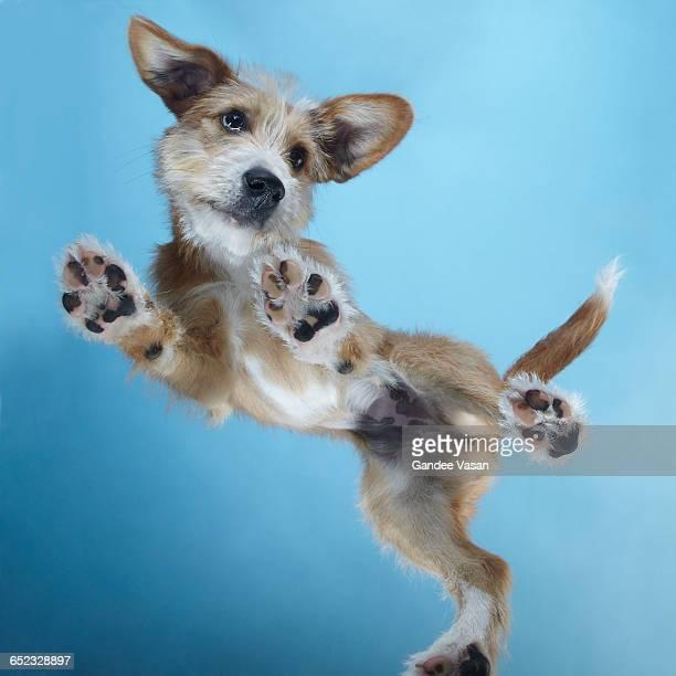 PuppyDance1