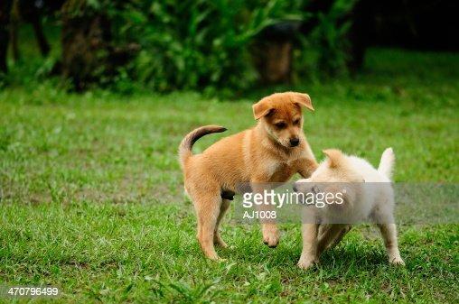 puppyish , dog