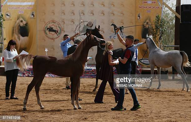 Purebred Arabian horses are paraded during a beauty contest on March 25 in the West Bank city of Jericho / AFP / ABBAS MOMANI