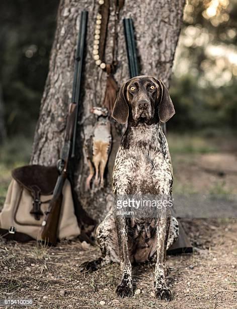 Purebreed hunting dog