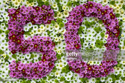 purple and white flowers in a shape of number  stock photo, Natural flower
